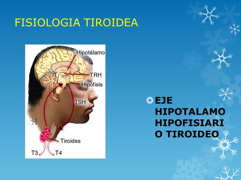FISIOLOGIA TIROIDEA EJE HIPOTALAMO HIPOFISIARI O TIROIDEO