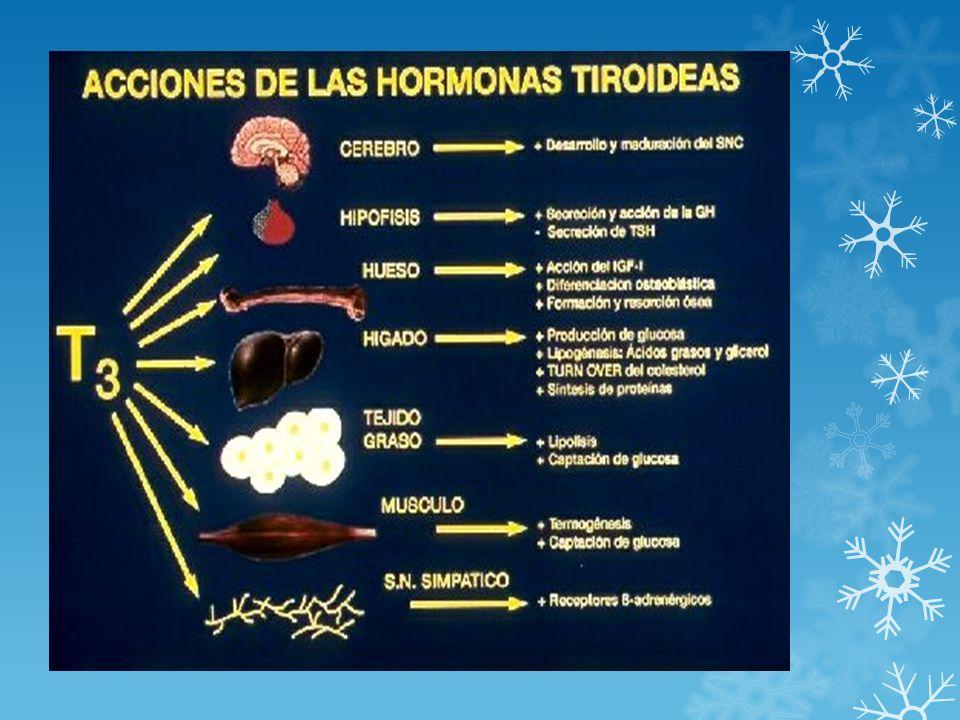 UTILIDAD CLÍNICA DE LAS DETERMINACIONES DE HORMONAS TIROIDEAS LIBRES MÉTODOS DE ESTIMADO DE LA FRACCIÓN LIBRE DE T3 (FT3E) MÉTODOS DE ESTIMADO DE LA FRACCIÓN LIBRE DE T3 (FT3E) Indicador temprano de recurrencia del hipertiroidismo (BTD, ) después de suspendida la terapia con drogas antitiroideas Indicador temprano de recurrencia del hipertiroidismo (BTD, ) después de suspendida la terapia con drogas antitiroideas TT3/TT4 puede ser usado para investigar el hipertiroidismo autoinmune/no autoinmune (> 0,024 molar sugiere estimulación tiroidea característica del BTD) TT3/TT4 puede ser usado para investigar el hipertiroidismo autoinmune/no autoinmune (> 0,024 molar sugiere estimulación tiroidea característica del BTD) Monitoreo de la respuesta aguda al tratamiento de la tirotoxicosis por BTD Monitoreo de la respuesta aguda al tratamiento de la tirotoxicosis por BTD Indicación de hipertiroidismo inducido por amiodarona ( o normal) Indicación de hipertiroidismo inducido por amiodarona ( o normal) Bocio congénito (defecto en la organificación del yodo por defecto en TPO o defecto en la síntesis de Tiroglobulina) con [ T3] Bocio congénito (defecto en la organificación del yodo por defecto en TPO o defecto en la síntesis de Tiroglobulina) con [ T3] Indicador de predicción de tirotoxicosis inducida por yodo en pacientes con bocio multinodular de larga evolución ( [ T3]) Indicador de predicción de tirotoxicosis inducida por yodo en pacientes con bocio multinodular de larga evolución ( [ T3]) FT3 + FT4 Diagnóstico de formas inusuales de hipertiroidismo y en ciertas condiciones raras: