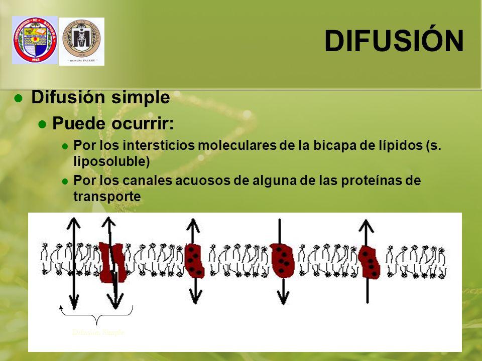 01/01/201414 DIFUSIÓN Difusión simple Puede ocurrir: Por los intersticios moleculares de la bicapa de lípidos (s. liposoluble) Por los canales acuosos