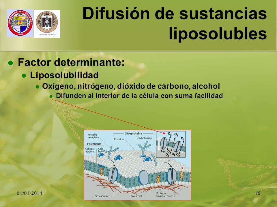 01/01/201416 Difusión de sustancias liposolubles Factor determinante: Liposolubilidad Oxígeno, nitrógeno, dióxido de carbono, alcohol Difunden al inte