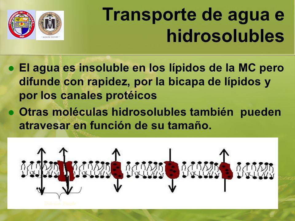 01/01/201417 Transporte de agua e hidrosolubles El agua es insoluble en los lípidos de la MC pero difunde con rapidez, por la bicapa de lípidos y por