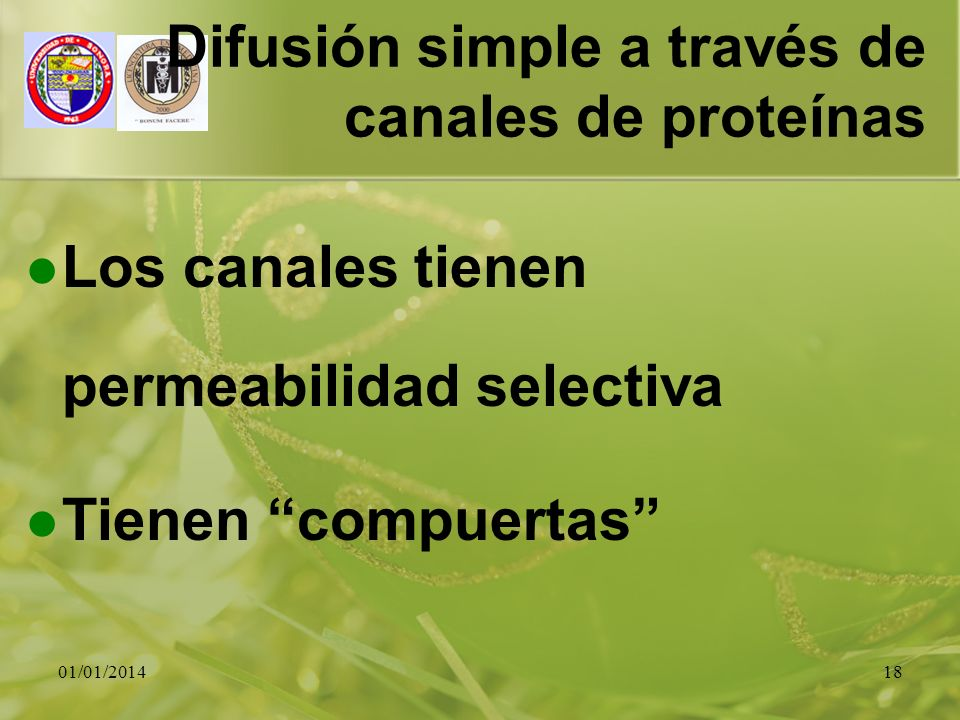01/01/201418 Difusión simple a través de canales de proteínas Los canales tienen permeabilidad selectiva Tienen compuertas