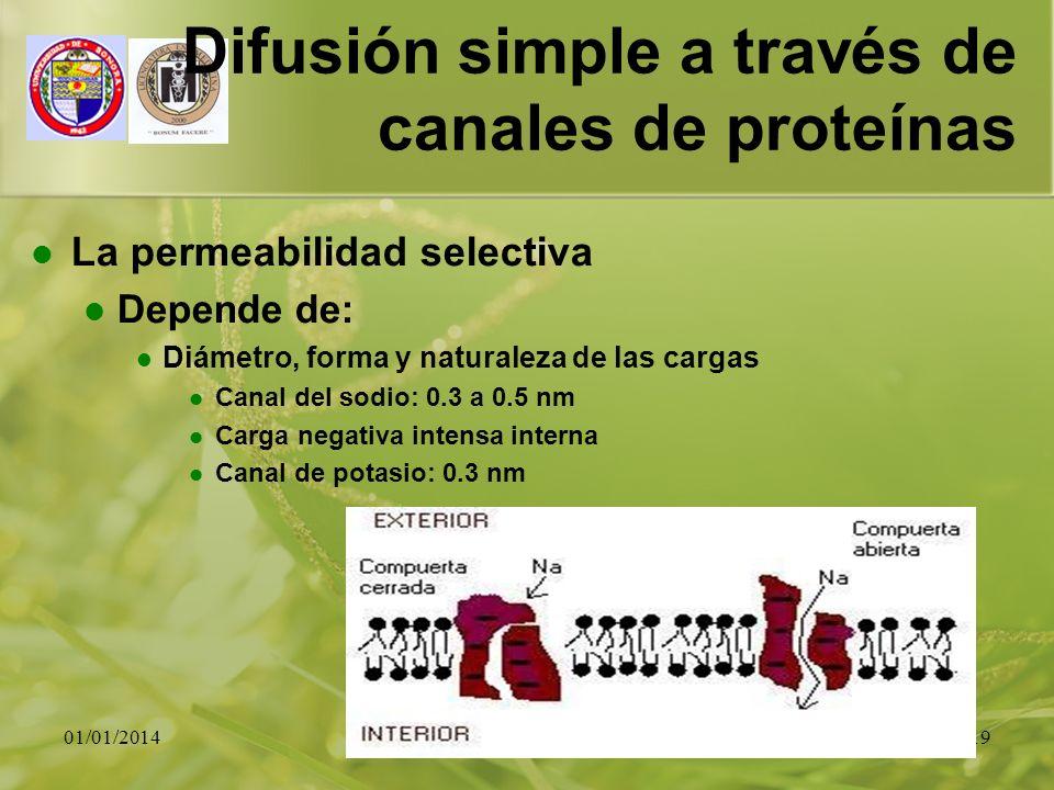 01/01/201419 Difusión simple a través de canales de proteínas La permeabilidad selectiva Depende de: Diámetro, forma y naturaleza de las cargas Canal
