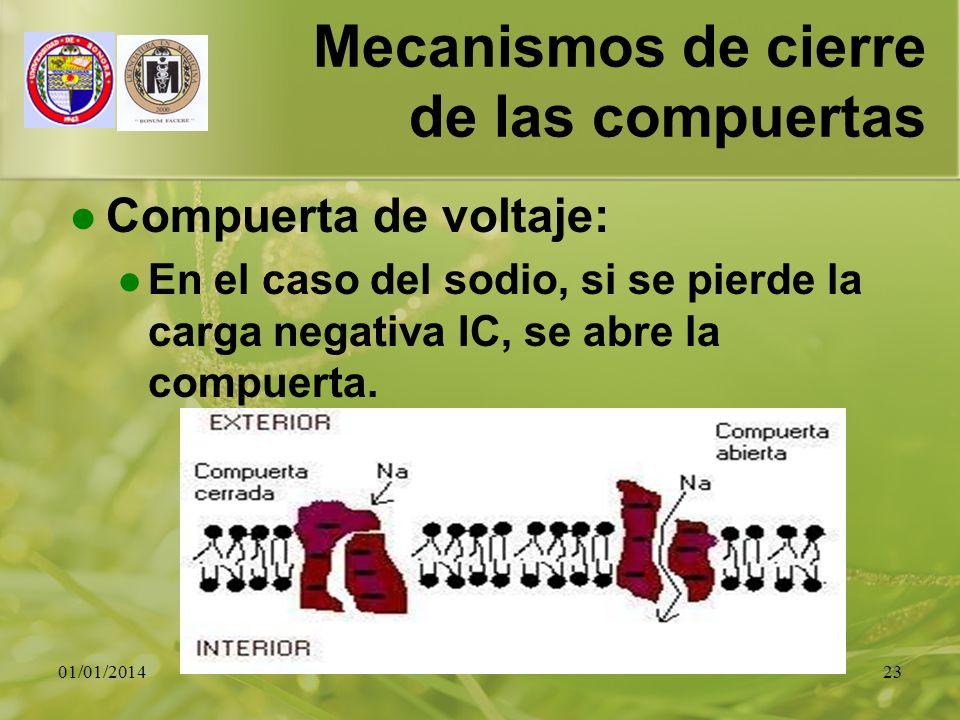 01/01/201423 Mecanismos de cierre de las compuertas Compuerta de voltaje: En el caso del sodio, si se pierde la carga negativa IC, se abre la compuert
