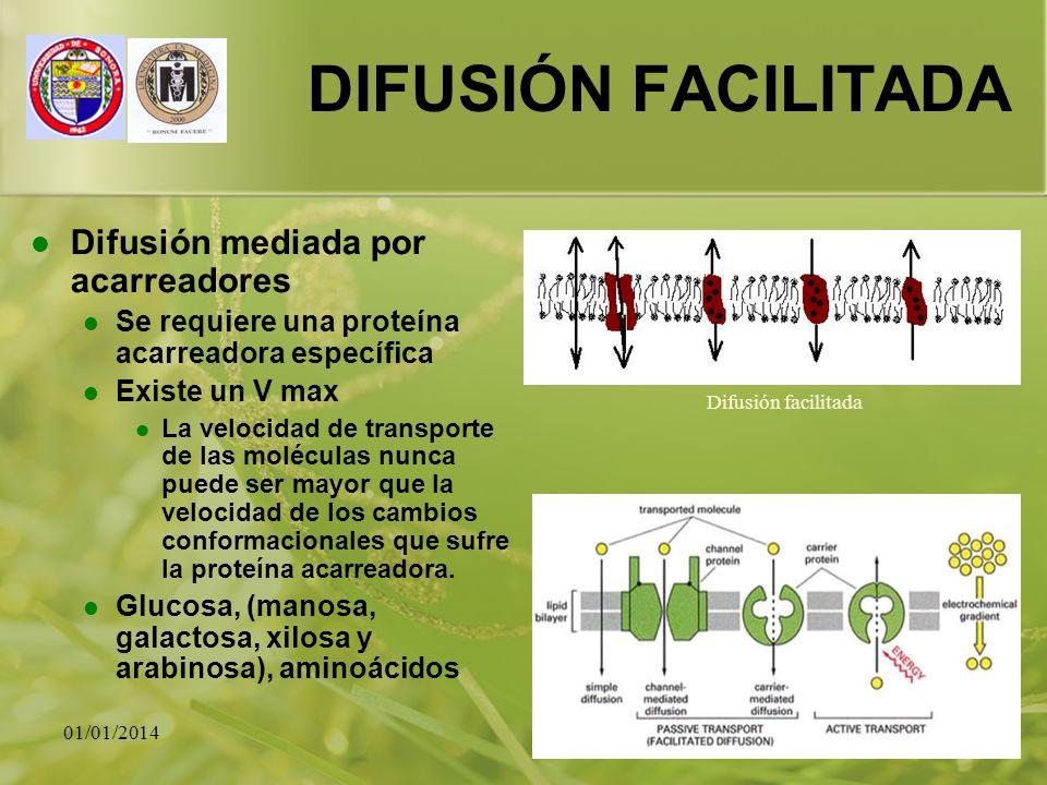 01/01/201425 DIFUSIÓN FACILITADA Difusión mediada por acarreadores Se requiere una proteína acarreadora específica Existe un V max La velocidad de tra