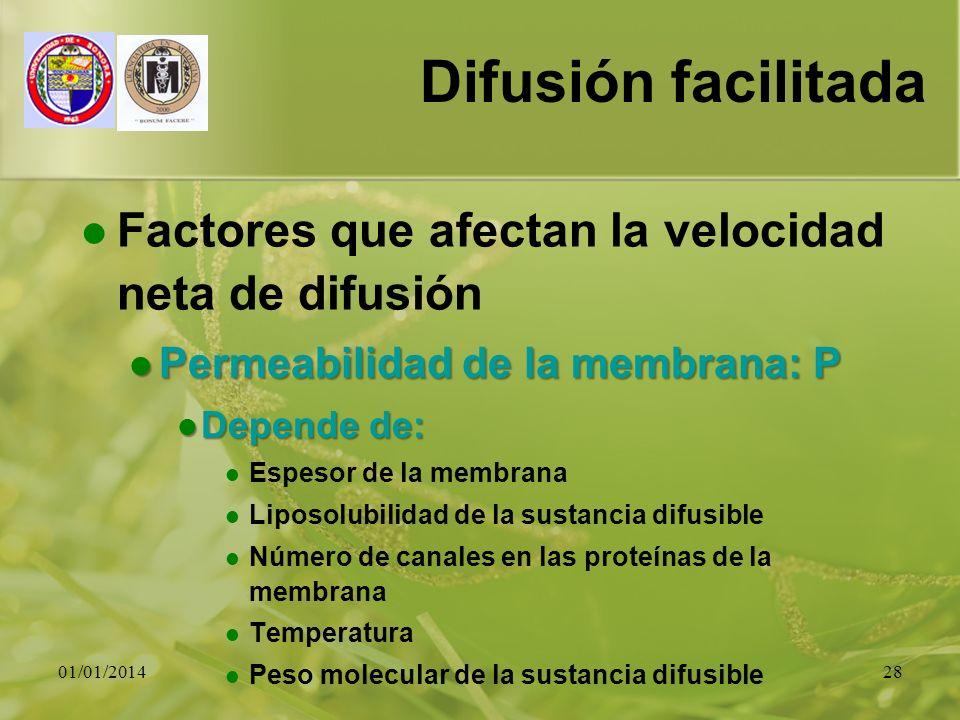 01/01/201428 Difusión facilitada Factores que afectan la velocidad neta de difusión Permeabilidad de la membrana: P Permeabilidad de la membrana: P De