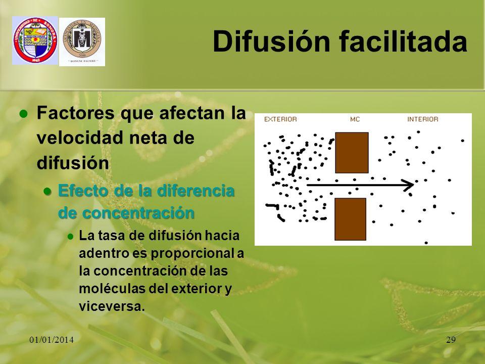 01/01/201429 Difusión facilitada Factores que afectan la velocidad neta de difusión Efecto de la diferencia de concentración Efecto de la diferencia d