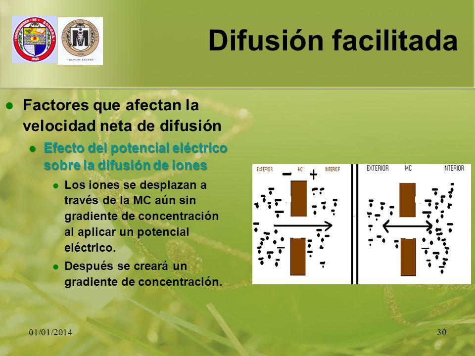 01/01/201430 Difusión facilitada Factores que afectan la velocidad neta de difusión Efecto del potencial eléctrico sobre la difusión de iones Efecto d