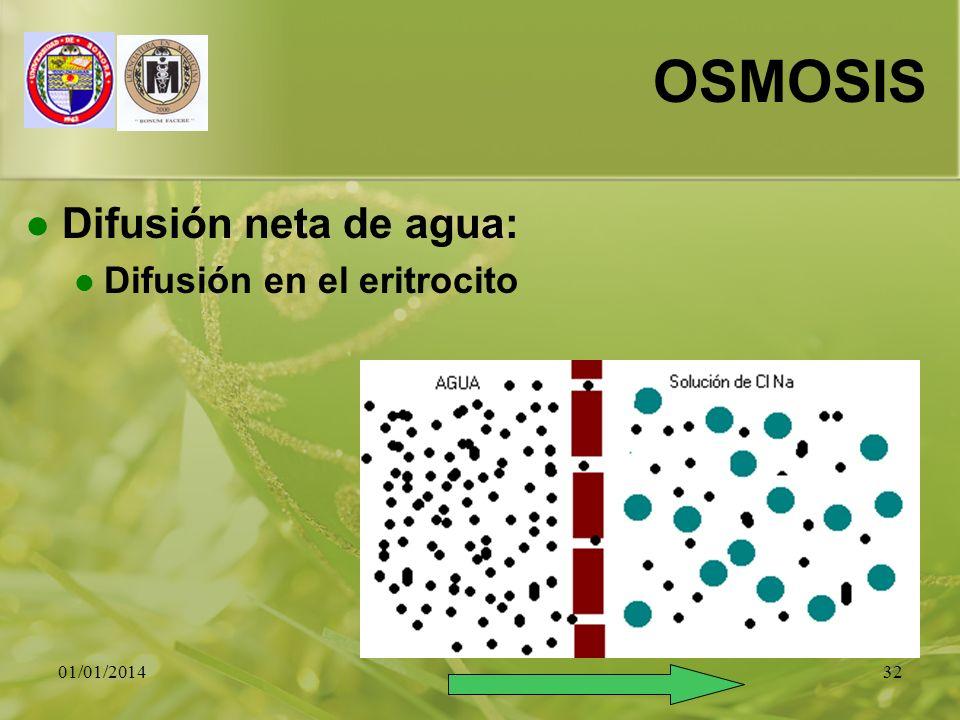 01/01/201432 OSMOSIS Difusión neta de agua: Difusión en el eritrocito