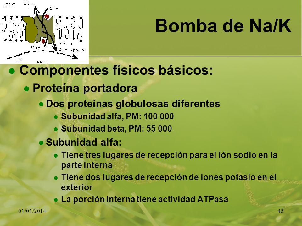 01/01/201443 Bomba de Na/K Componentes físicos básicos: Proteína portadora Dos proteínas globulosas diferentes Subunidad alfa, PM: 100 000 Subunidad b