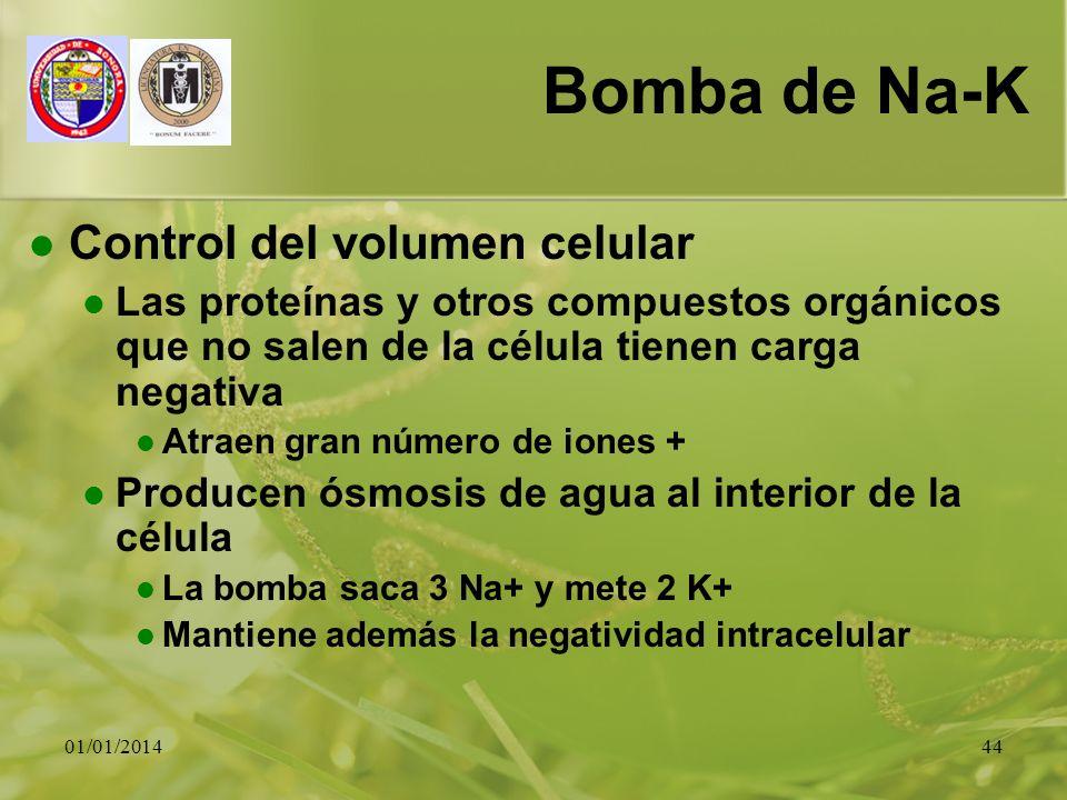 01/01/201444 Bomba de Na-K Control del volumen celular Las proteínas y otros compuestos orgánicos que no salen de la célula tienen carga negativa Atra