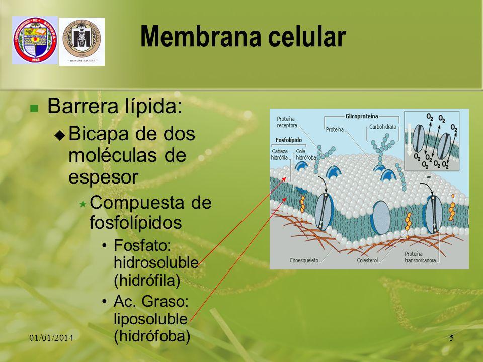 01/01/20145 Membrana celular Barrera lípida: Bicapa de dos moléculas de espesor Compuesta de fosfolípidos Fosfato: hidrosoluble (hidrófila) Ac. Graso: