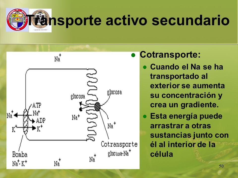 01/01/201450 Transporte activo secundario Cotransporte: Cuando el Na se ha transportado al exterior se aumenta su concentración y crea un gradiente. E