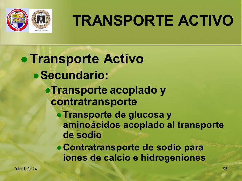 01/01/201455 TRANSPORTE ACTIVO Transporte Activo Secundario: Transporte acoplado y contratransporte Transporte de glucosa y aminoácidos acoplado al tr