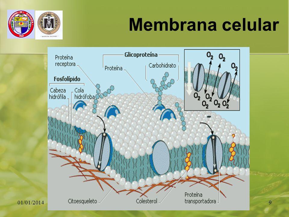 01/01/20149 Membrana celular