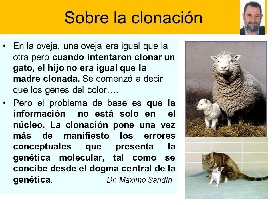 Sobre la clonación En la oveja, una oveja era igual que la otra pero cuando intentaron clonar un gato, el hijo no era igual que la madre clonada. Se c