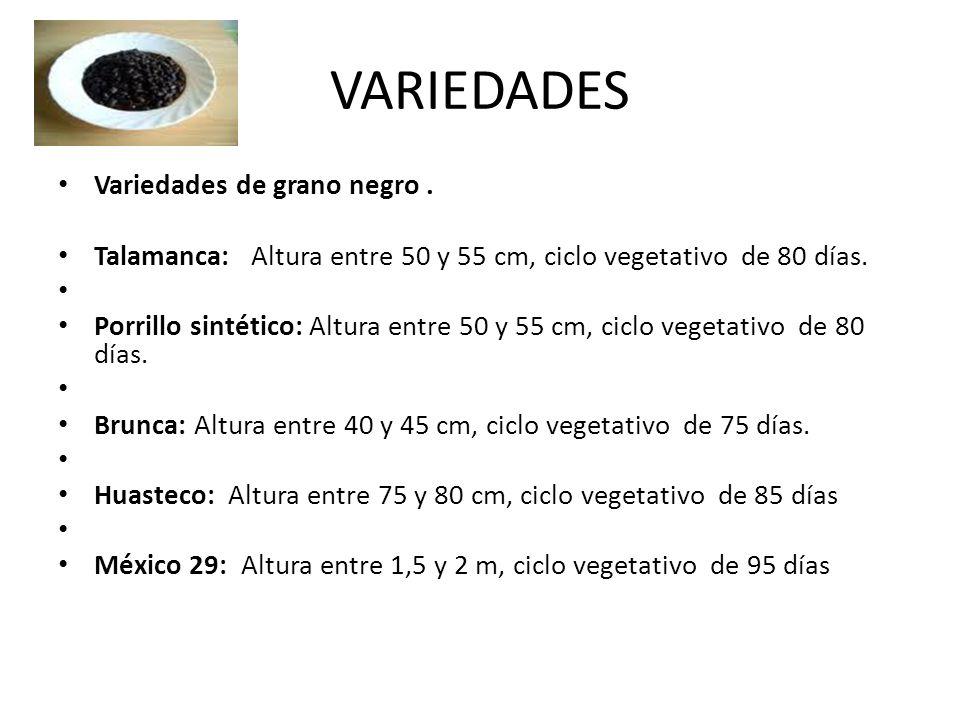 VARIEDADES Variedades de grano negro. Talamanca: Altura entre 50 y 55 cm, ciclo vegetativo de 80 días. Porrillo sintético: Altura entre 50 y 55 cm, ci