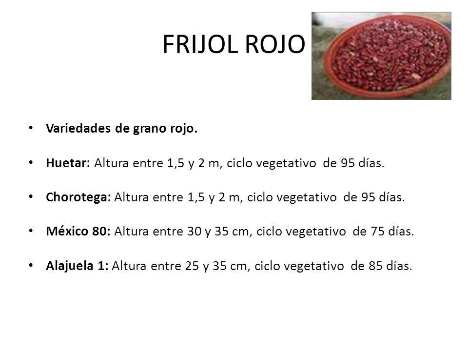 FRIJOL ROJO Variedades de grano rojo. Huetar: Altura entre 1,5 y 2 m, ciclo vegetativo de 95 días. Chorotega: Altura entre 1,5 y 2 m, ciclo vegetativo