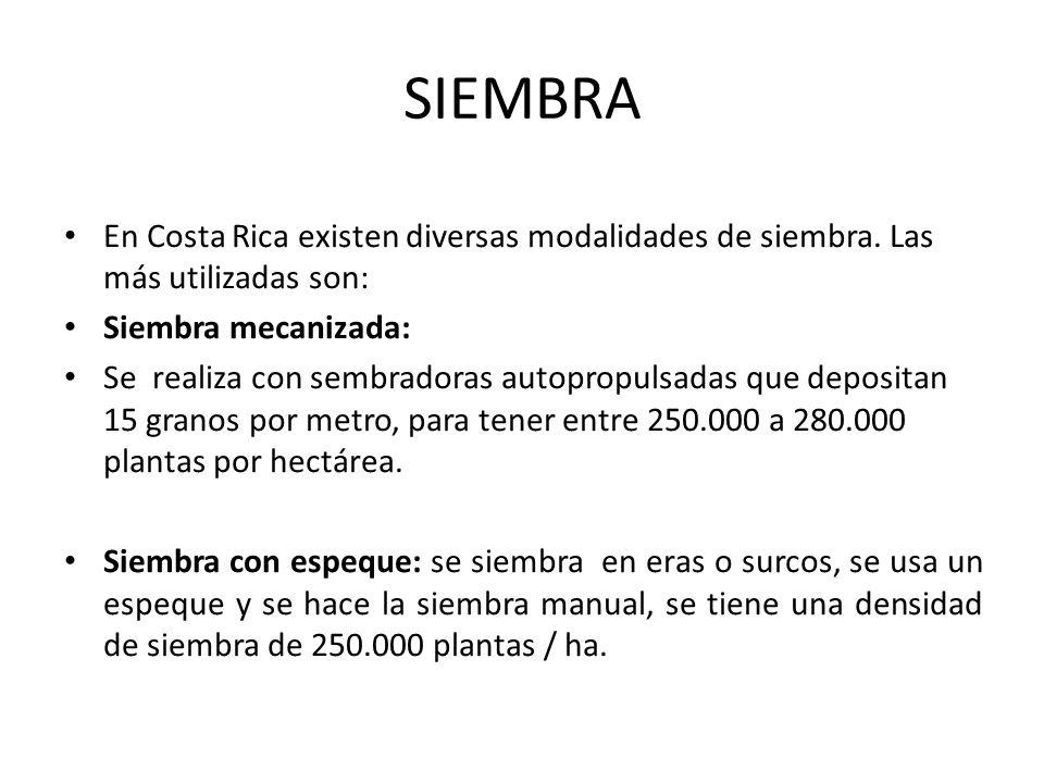 SIEMBRA En Costa Rica existen diversas modalidades de siembra. Las más utilizadas son: Siembra mecanizada: Se realiza con sembradoras autopropulsadas