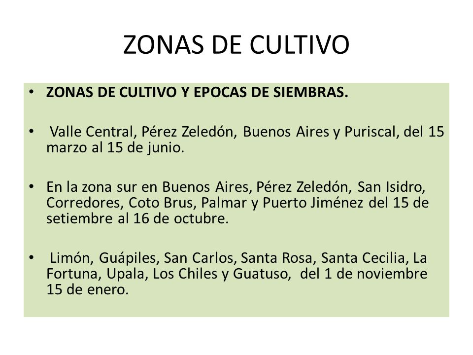ZONAS DE CULTIVO ZONAS DE CULTIVO Y EPOCAS DE SIEMBRAS. Valle Central, Pérez Zeledón, Buenos Aires y Puriscal, del 15 marzo al 15 de junio. En la zona