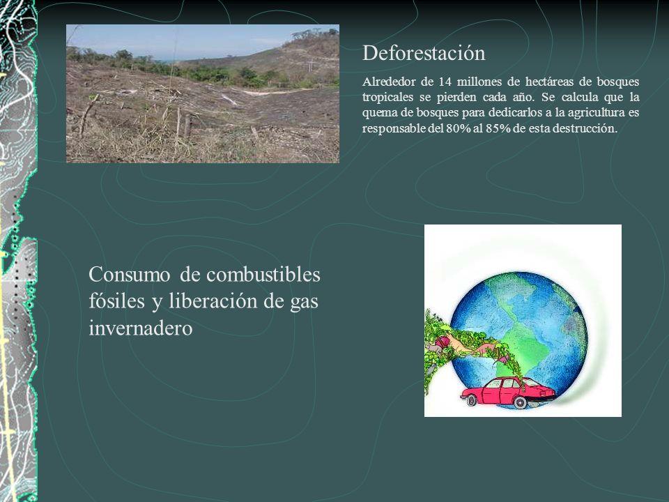 Deforestación Alrededor de 14 millones de hectáreas de bosques tropicales se pierden cada año. Se calcula que la quema de bosques para dedicarlos a la