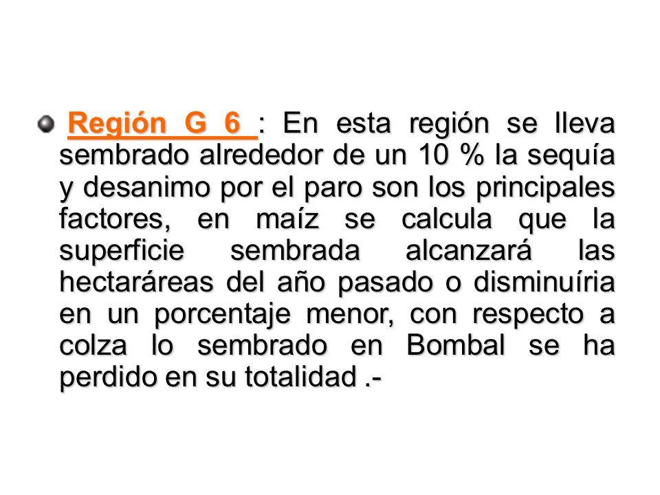 Región G 6 : En esta región se lleva sembrado alrededor de un 10 % la sequía y desanimo por el paro son los principales factores, en maíz se calcula que la superficie sembrada alcanzará las hectaráreas del año pasado o disminuíria en un porcentaje menor, con respecto a colza lo sembrado en Bombal se ha perdido en su totalidad.- Región G 6 : En esta región se lleva sembrado alrededor de un 10 % la sequía y desanimo por el paro son los principales factores, en maíz se calcula que la superficie sembrada alcanzará las hectaráreas del año pasado o disminuíria en un porcentaje menor, con respecto a colza lo sembrado en Bombal se ha perdido en su totalidad.-