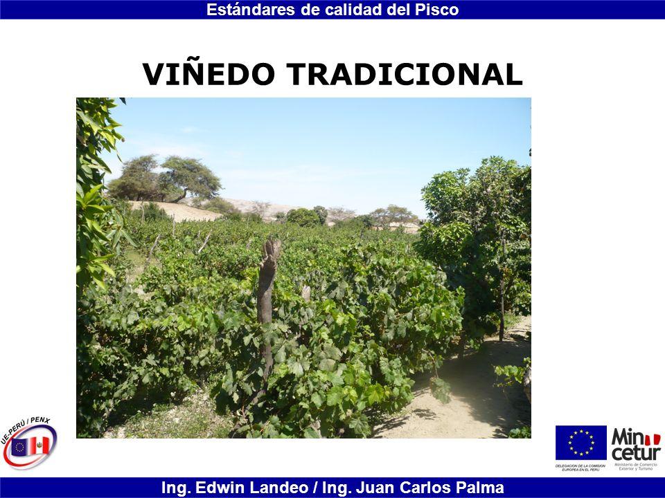 Estándares de calidad del Pisco Ing. Edwin Landeo / Ing. Juan Carlos Palma VIÑEDO TRADICIONAL