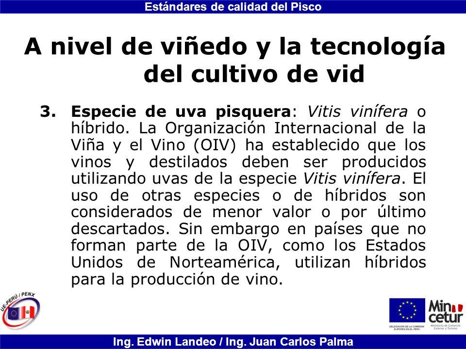 Estándares de calidad del Pisco Ing. Edwin Landeo / Ing. Juan Carlos Palma A nivel de viñedo y la tecnología del cultivo de vid 3.Especie de uva pisqu