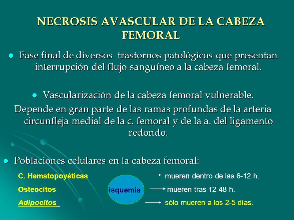 NECROSIS AVASCULAR DE LA CABEZA FEMORAL Fase final de diversos trastornos patológicos que presentan interrupción del flujo sanguíneo a la cabeza femor