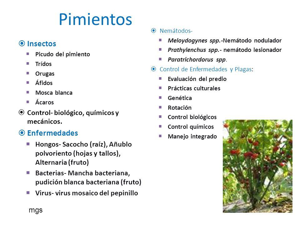Pimientos Insectos Picudo del pimiento Trídos Orugas Áfidos Mosca blanca Ácaros Control- biológico, químicos y mecánicos. Enfermedades Hongos- Sacocho
