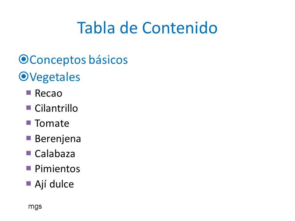 Tabla de Contenido Conceptos básicos Vegetales Recao Cilantrillo Tomate Berenjena Calabaza Pimientos Ají dulce mgs