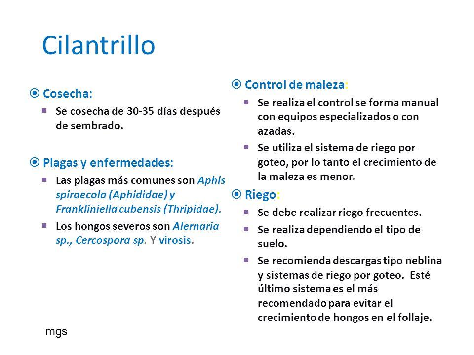 Cilantrillo Cosecha: Se cosecha de 30-35 días después de sembrado. Plagas y enfermedades: Las plagas más comunes son Aphis spiraecola (Aphididae) y Fr