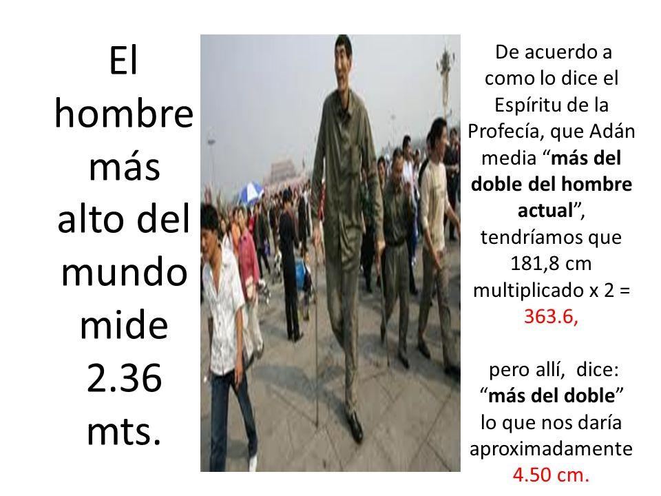 El hombre más alto del mundo mide 2.36 mts. De acuerdo a como lo dice el Espíritu de la Profecía, que Adán media más del doble del hombre actual, tend