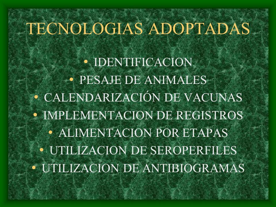 TECNOLOGIAS ADOPTADAS IDENTIFICACION PESAJE DE ANIMALES CALENDARIZACIÓN DE VACUNAS IMPLEMENTACION DE REGISTROS ALIMENTACION POR ETAPAS UTILIZACION DE