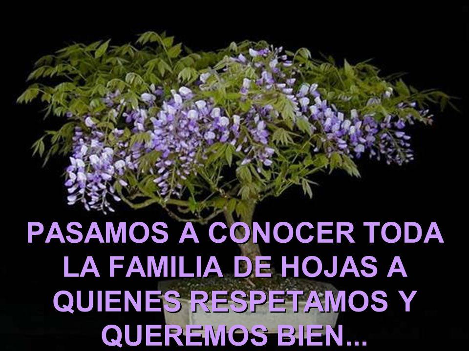 PASAMOS A CONOCER TODA LA FAMILIA DE HOJAS A QUIENES RESPETAMOS Y QUEREMOS BIEN...