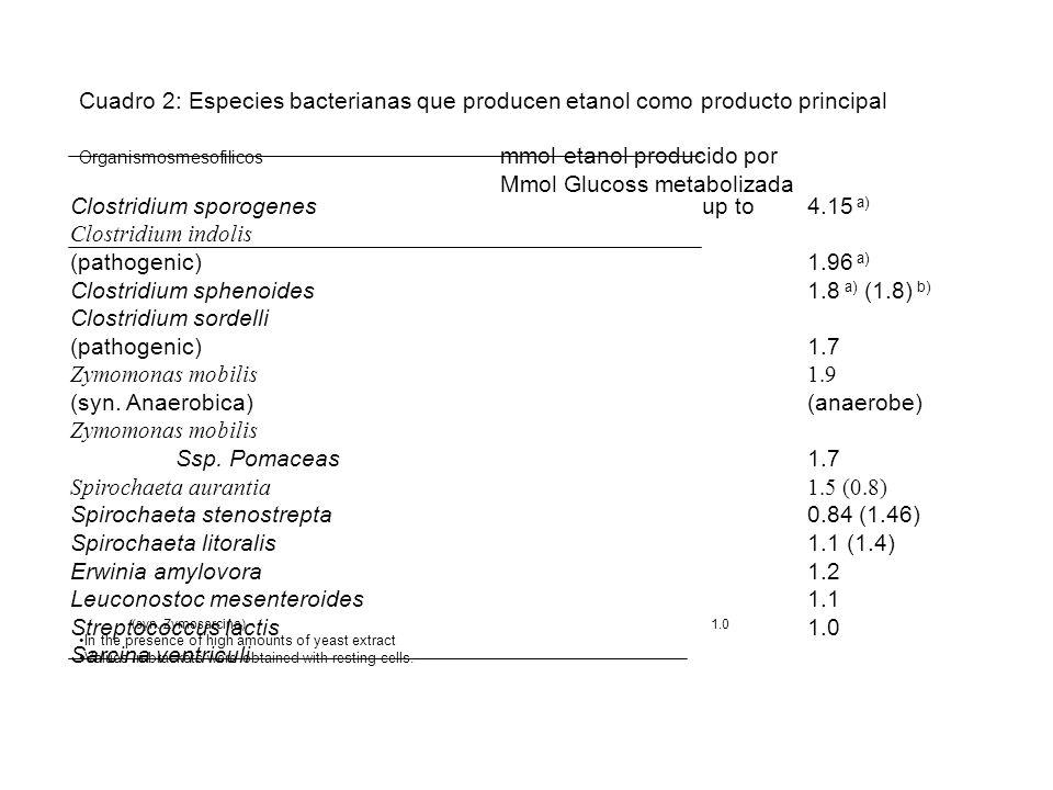 Cuadro 2: Especies bacterianas que producen etanol como producto principal Organismosmesofilicos mmol etanol producido por Mmol Glucoss metabolizada C
