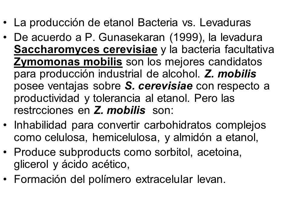 La producción de etanol Bacteria vs. Levaduras De acuerdo a P. Gunasekaran (1999), la levadura Saccharomyces cerevisiae y la bacteria facultativa Zymo