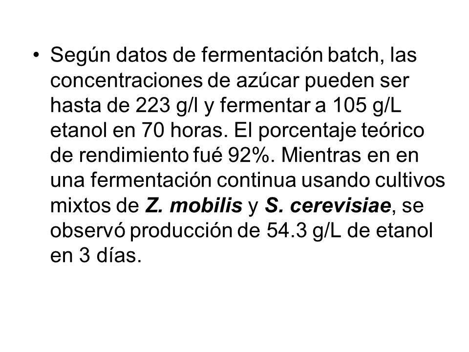 Según datos de fermentación batch, las concentraciones de azúcar pueden ser hasta de 223 g/l y fermentar a 105 g/L etanol en 70 horas. El porcentaje t