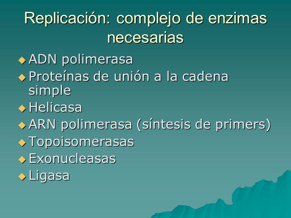 Replicación: complejo de enzimas necesarias ADN polimerasa ADN polimerasa Proteínas de unión a la cadena simple Proteínas de unión a la cadena simple