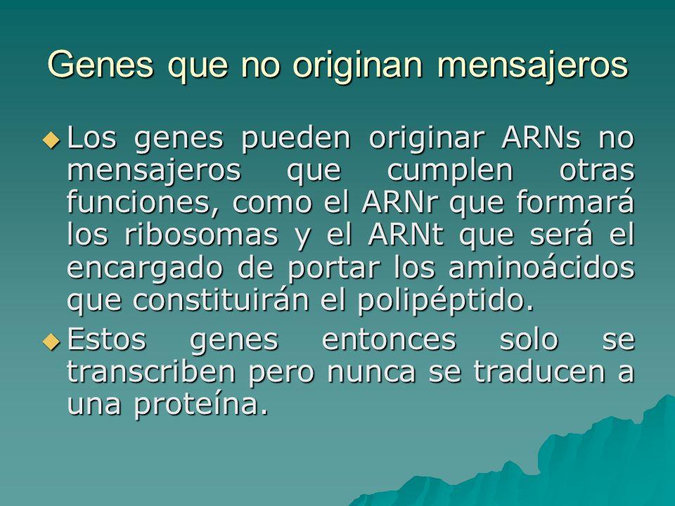 Genes que no originan mensajeros Los genes pueden originar ARNs no mensajeros que cumplen otras funciones, como el ARNr que formará los ribosomas y el