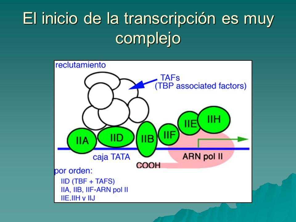 El inicio de la transcripción es muy complejo