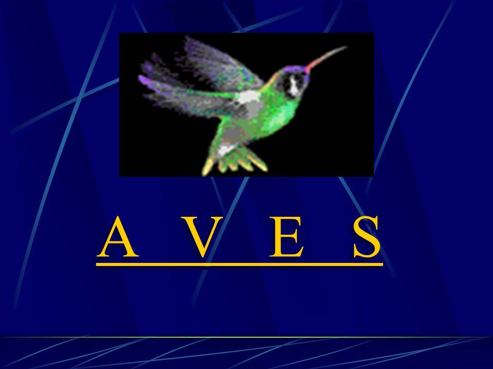 A V E S