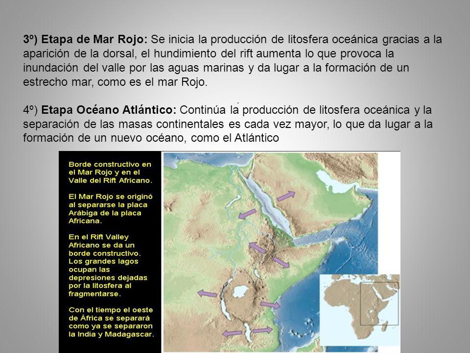 . 3º) Etapa de Mar Rojo: Se inicia la producción de litosfera oceánica gracias a la aparición de la dorsal, el hundimiento del rift aumenta lo que pro