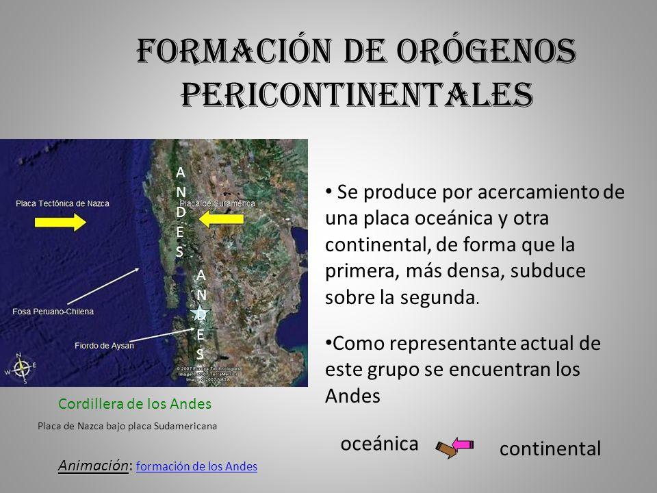 Formación de orógenos pericontinentales Se produce por acercamiento de una placa oceánica y otra continental, de forma que la primera, más densa, subd