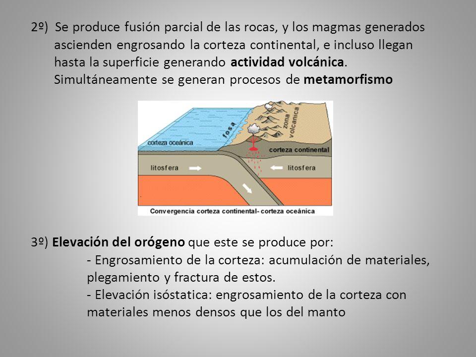 2º) Se produce fusión parcial de las rocas, y los magmas generados ascienden engrosando la corteza continental, e incluso llegan hasta la superficie g