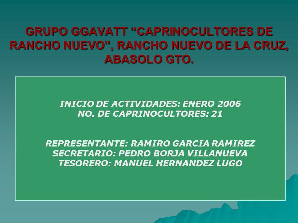GRUPO GGAVATT CAPRINOCULTORES DE RANCHO NUEVO, RANCHO NUEVO DE LA CRUZ, ABASOLO GTO. INICIO DE ACTIVIDADES: ENERO 2006 NO. DE CAPRINOCULTORES: 21 REPR