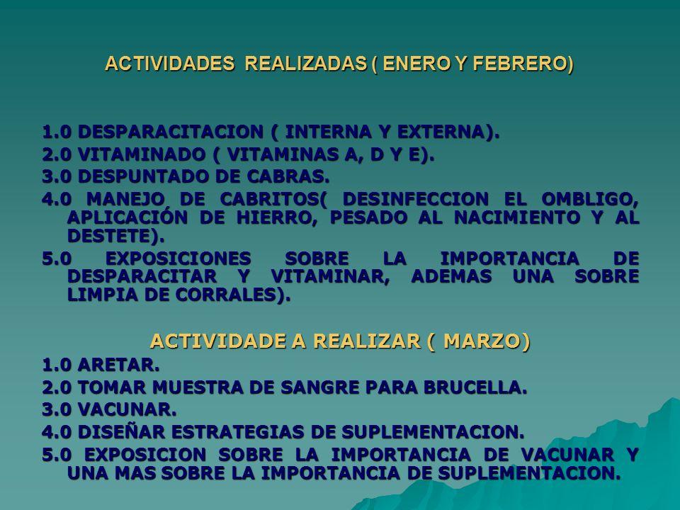ACTIVIDADES REALIZADAS ( ENERO Y FEBRERO) 1.0 DESPARACITACION ( INTERNA Y EXTERNA). 2.0 VITAMINADO ( VITAMINAS A, D Y E). 3.0 DESPUNTADO DE CABRAS. 4.