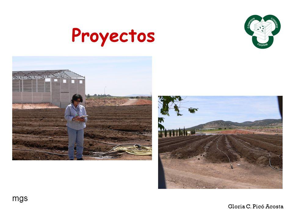 Proyectos Gloria C. Picó Acosta mgs