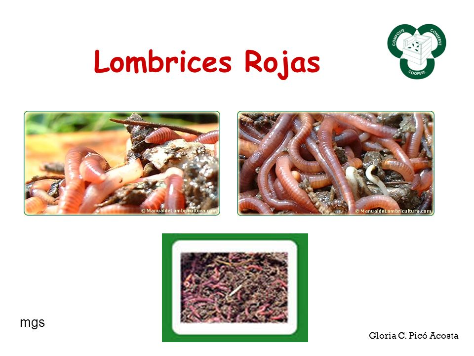 Lombrices Rojas Gloria C. Picó Acosta mgs