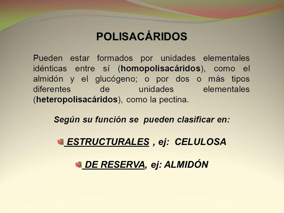 POLISACÁRIDOS Pueden estar formados por unidades elementales idénticas entre sí (homopolisacáridos), como el almidón y el glucógeno; o por dos o más t